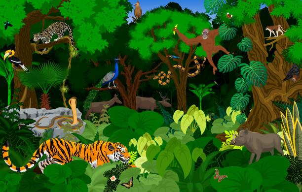 vektor-thailand dschungel regenwald illustration mit tieren - megabat stock-grafiken, -clipart, -cartoons und -symbole