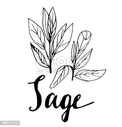 istock Vector the background, sketch the sage 939741124