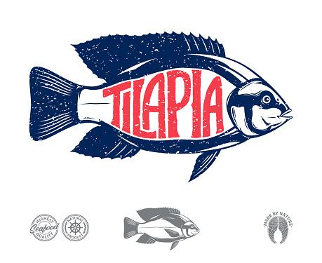 Vector tilapia fish label