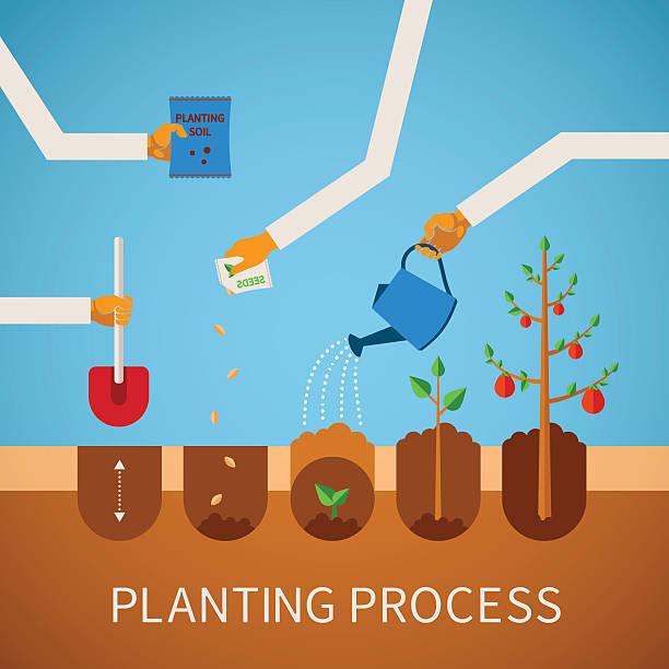 ilustrações de stock, clip art, desenhos animados e ícones de vector timeline infográfico conceito de processo de em - plantar