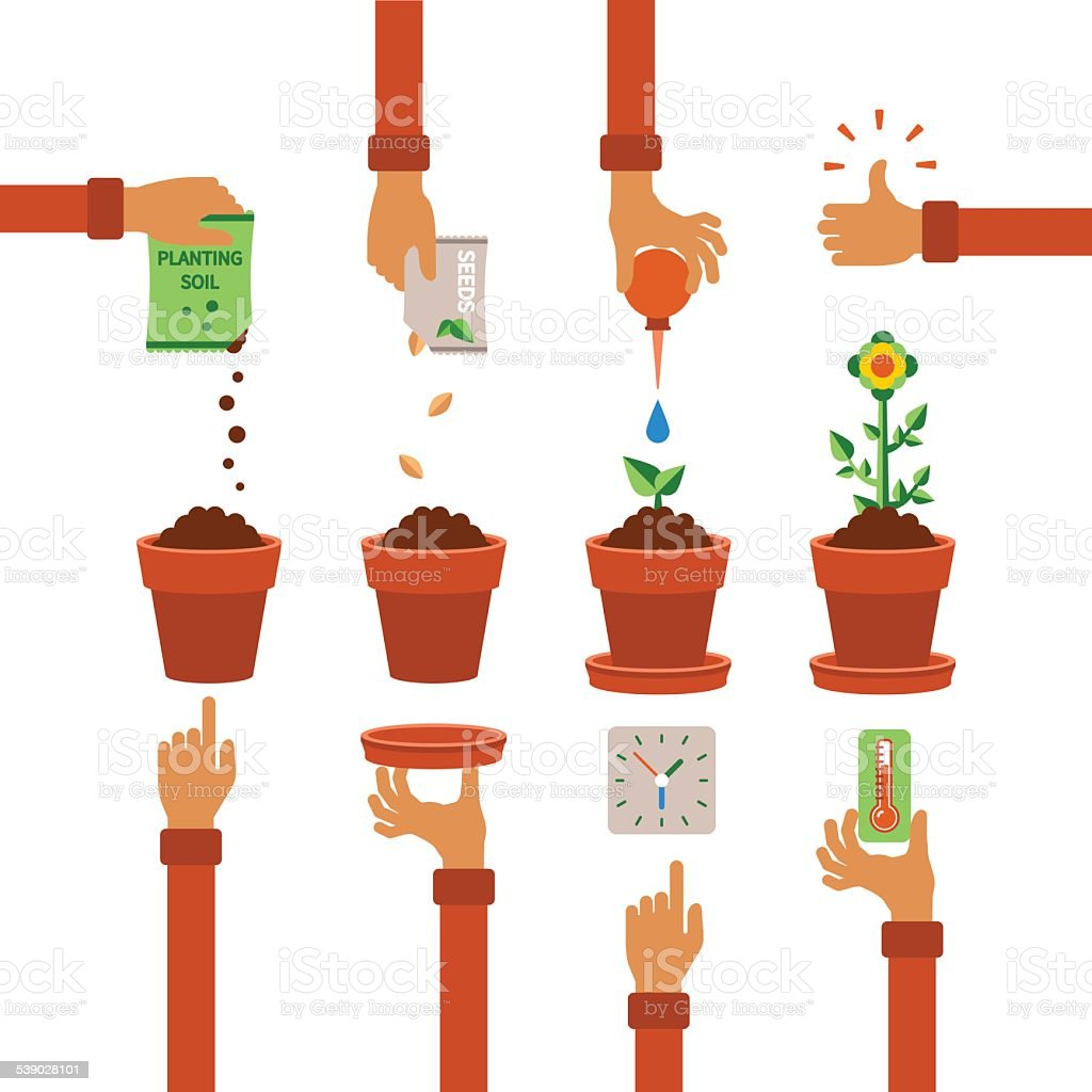 Vector timeline infographic concept of planting process vector art illustration