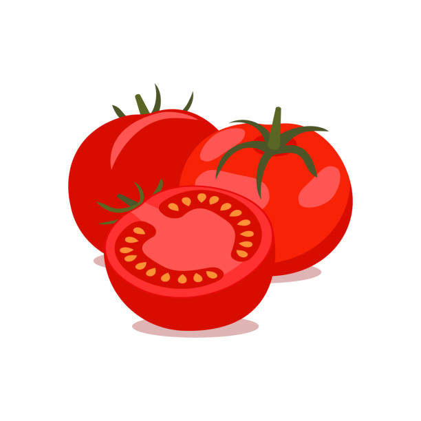 Vector tomato, bunch. vector illustration. Vector tomato. bunch of whole and cut tomatoes on white background, vector illustration. tomato stock illustrations