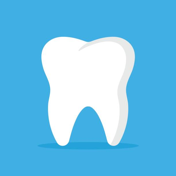 illustrazioni stock, clip art, cartoni animati e icone di tendenza di vector tooth icon. oral medicine, stomatology, dental medicine concepts. white tooth. modern flat design graphic element. vector illustration - denti