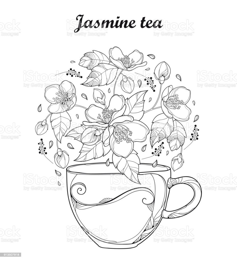 Vector Transparency Cup Of Jasmine Herbal Tea Isolated On White