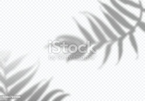 istock Vector Transparent Shadows of Leaves. Decorative Design Elements for Collages. Creative Overlay Effect for Mockups 1284791134