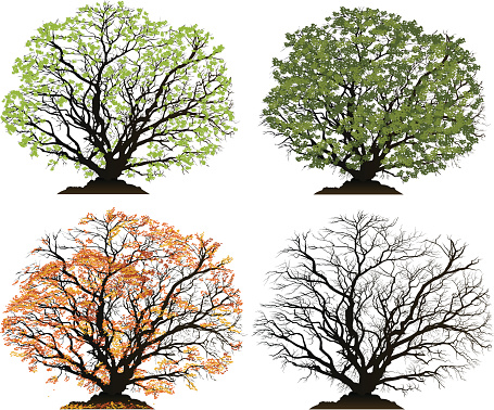 Vector tree for each season, Spring, Summer, Autumn, Winter