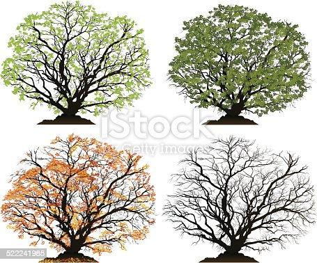 Four detailed vector illustrations of a tree for each season. Spring, Summer, Autumn, Winter.