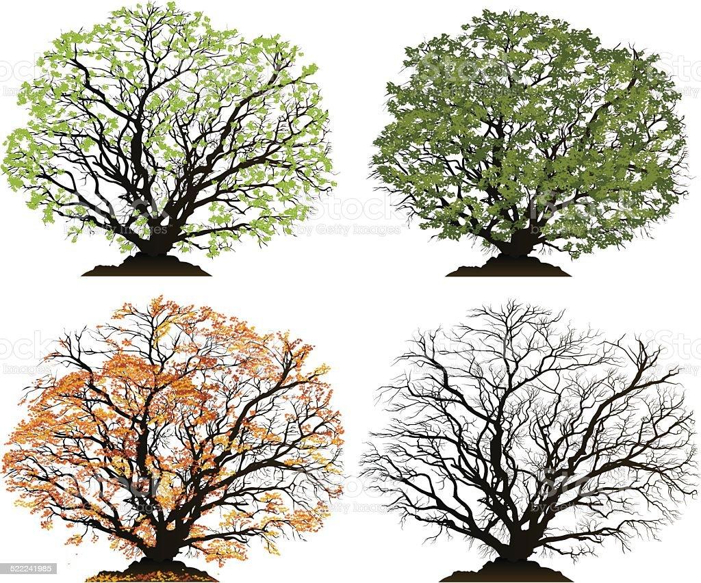Vector tree for each season, Spring, Summer, Autumn, Winter vector art illustration