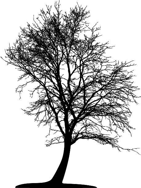 Vector Tree Isolated Vector Tree Isolated back lit stock illustrations