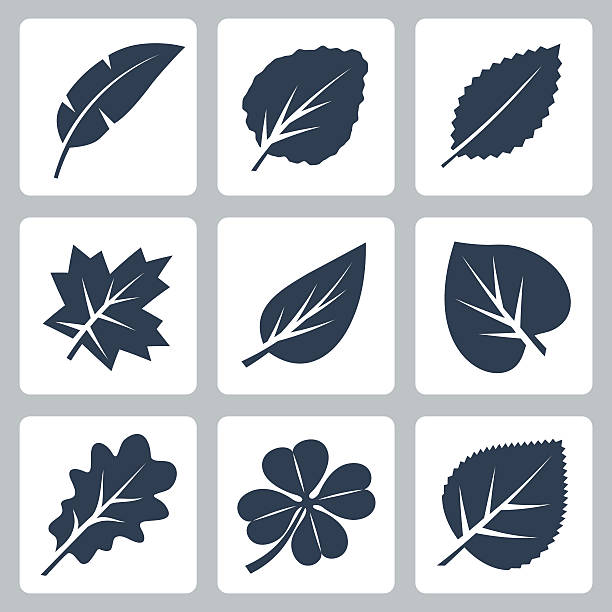 Vector tree leaves icons set Vector tree leaves icons set cottonwood tree stock illustrations