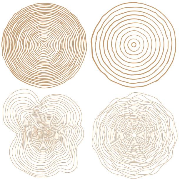 ilustrações, clipart, desenhos animados e ícones de vetorial fundo de anéis de árvore e serra cortar elementos gráficos conceitual de tronco de árvore - organic shapes