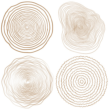 vector tree rings background and saw cut tree trunk clipart