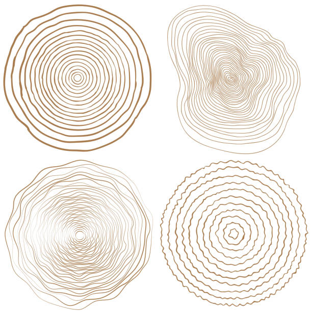 vector tree rings background and saw cut tree trunk vector natural pattern stock illustrations