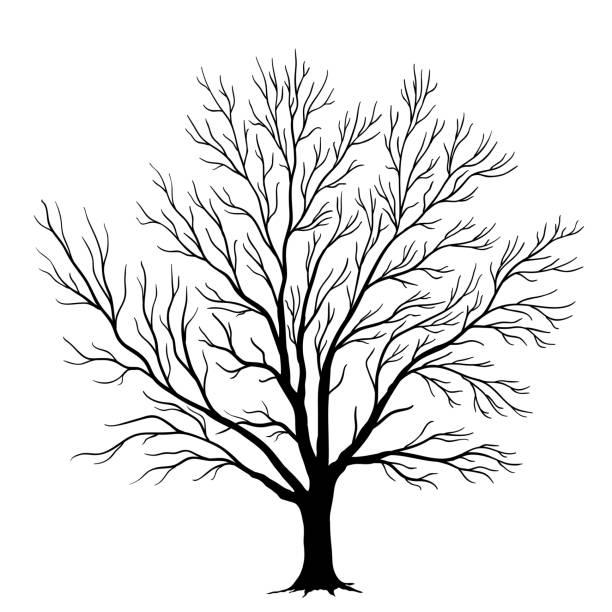 vector tree silhouette isolated on white background - winterruhe stock-grafiken, -clipart, -cartoons und -symbole