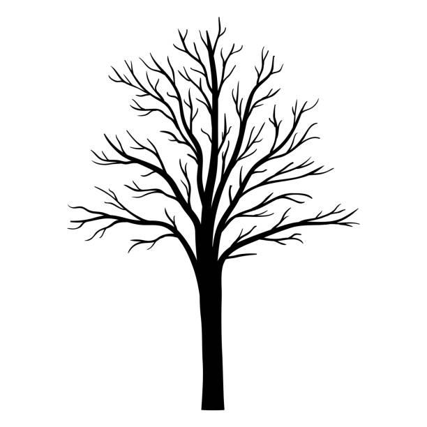 Albero vettoriale silhouette - illustrazione arte vettoriale