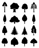 Vector different types of trees silhouettes isolated on white.