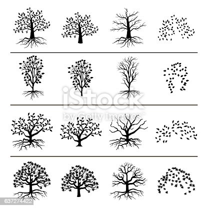 Vector trees with roots, foliage and fallen leaves isolated on white background. Silhouette of tree, and leaf monochrome illustration