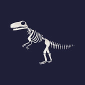 Vector tyrannosaurus dinosaur fossil skeleton. Prehistoric predator, jurrasic giant animal icon. Paleontologu and archeology artifact. T-rex monster white silhouette.