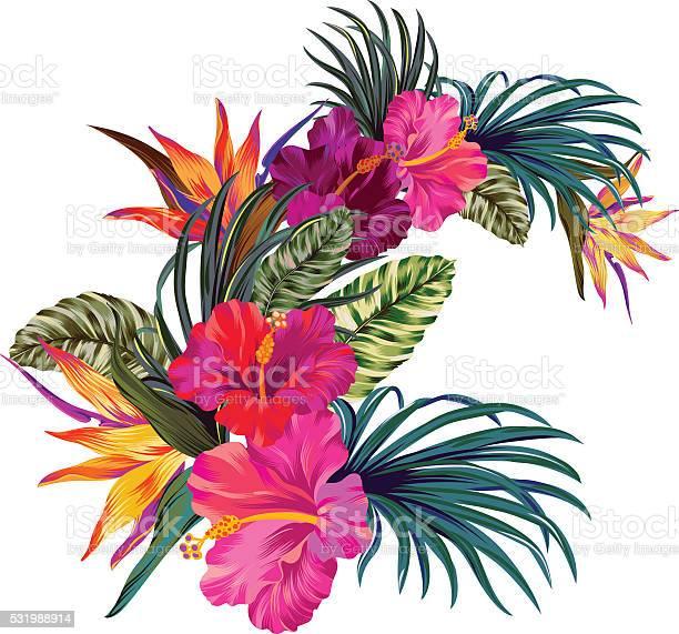 Vector tropical bouquet vector id531988914?b=1&k=6&m=531988914&s=612x612&h=7clsybohcqpxza3gmx 5ljtllgousby0ylboq6rojm4=