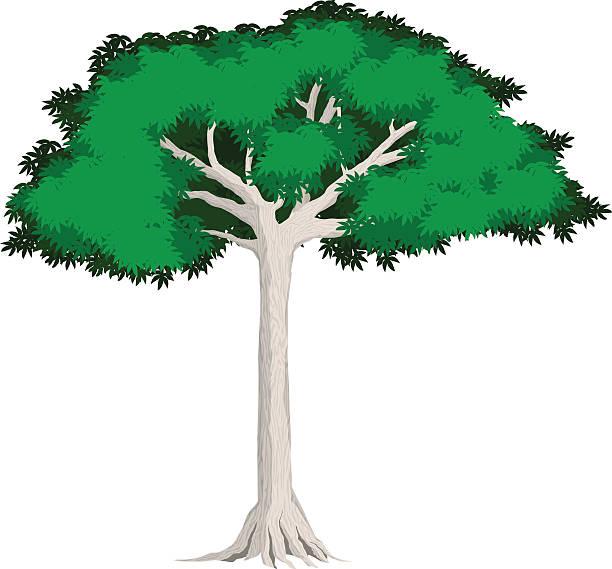 Best Silk Cotton Tree Illustrations, Royalty-Free Vector ...