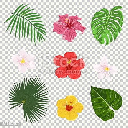 Vector illustration of tropical leaves and flowers icon set isolated on transparency grid background. Palm leaf, banana leaf, hibiscus and plumeria flowers. Jungle tree design templates. Botanical and floral collection.