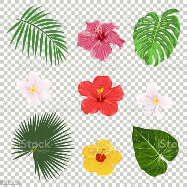 Vector tropical leaves and flowers icon set isolated on transparency vector id891102572?b=1&k=6&m=891102572&s=612x612&h=xy1issjeaj zne0sgqdg2glhu95jp0qdynnzvjob45o=