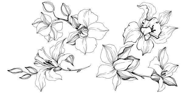 Vector tropical orchid flowers. Isolated illustration element. Vector tropical orchid flowers. Floral botanical flower. Isolated illustration element. Vector wildflower for background, texture, wrapper pattern, frame or border. autumn silhouettes stock illustrations