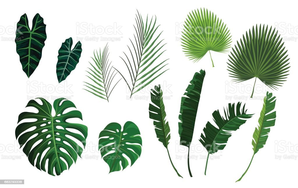 Vector tropical palm leaves, jungle leaves set vector art illustration