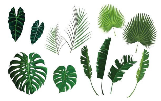 illustrazioni stock, clip art, cartoni animati e icone di tendenza di vector tropical palm leaves, jungle leaves set - foglie