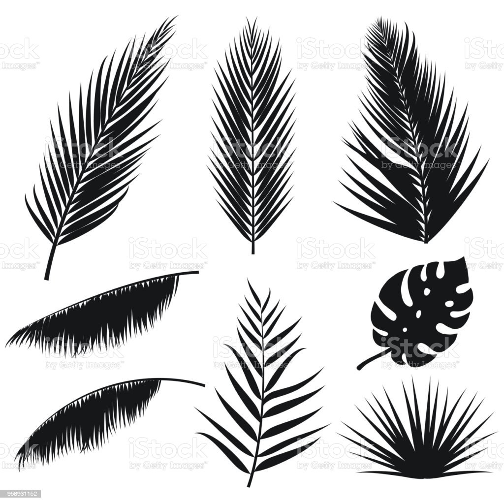 Vector tropical palm leaves silhouette set isolated on white background. Summer exotic flora. Jungle palm and monstera leaf. Illustration for your design. Eps 10. royalty-free vector tropical palm leaves silhouette set isolated on white background summer exotic flora jungle palm and monstera leaf illustration for your design eps 10 stock illustration - download image now