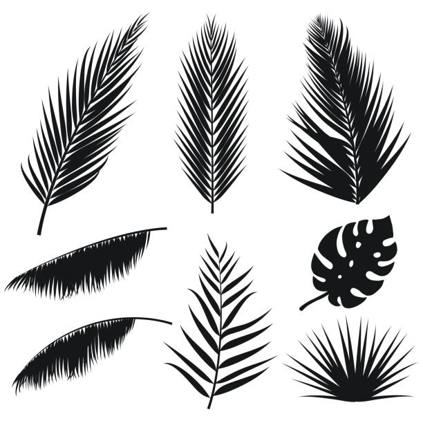 vector tropical palm leaves silhouette set isolated on white background. summer exotic flora. jungle palm and monstera leaf. illustration for your design. eps 10. - palm leaf stock illustrations, clip art, cartoons, & icons