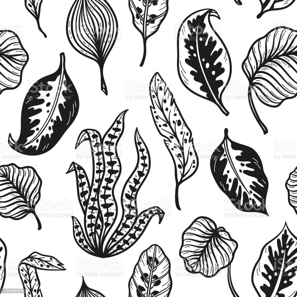Vector Tropical Palm Tree Leaves Seamless Pattern Hand Drawn Doodle Palm Leaf Sketch Drawing Summer Floral Background Tropical Plants Wallpaper Stock Illustration Download Image Now Istock
