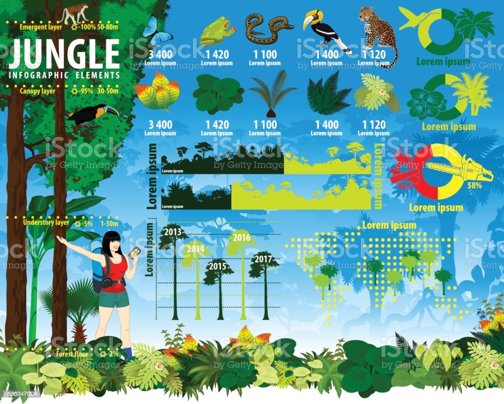 熱帯雨林ジャングルのインフォ グラフィック要素をベクトルします。 ベクターアートイラスト