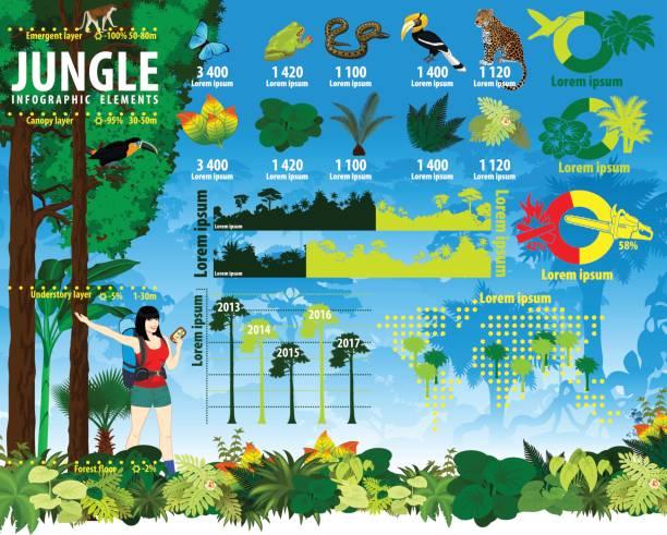 熱帯雨林ジャングルのインフォ グラフィック要素をベクトルします。 - 野生動物旅行点のイラスト素材/クリップアート素材/マンガ素材/アイコン素材