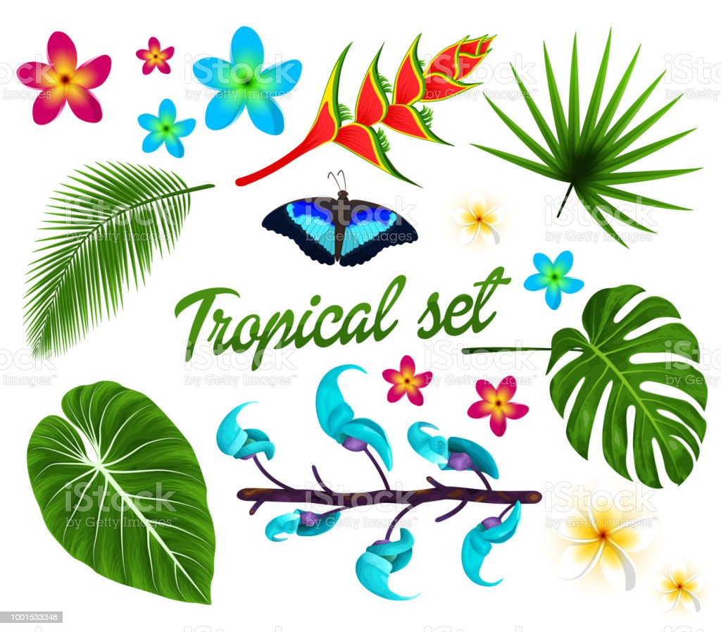 Vector tropical set, jungle leaves set, plumeria, tropical flowers. Butterfly. isolated on white background. Vector illustration. vector art illustration