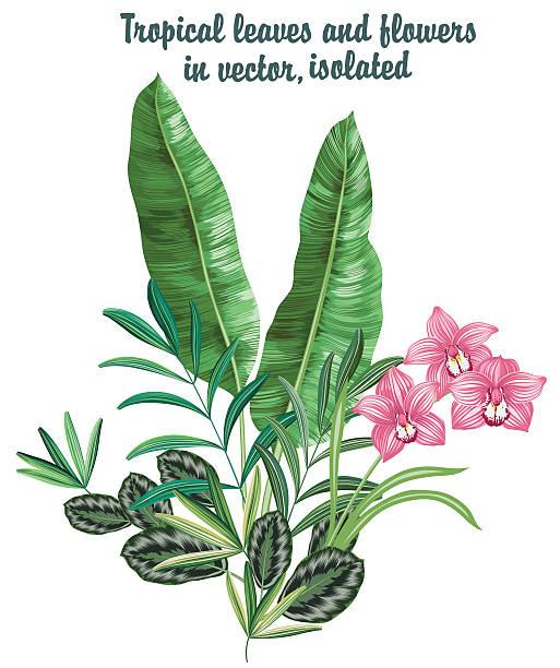 Vector tropical set with orchid – Vektorgrafik