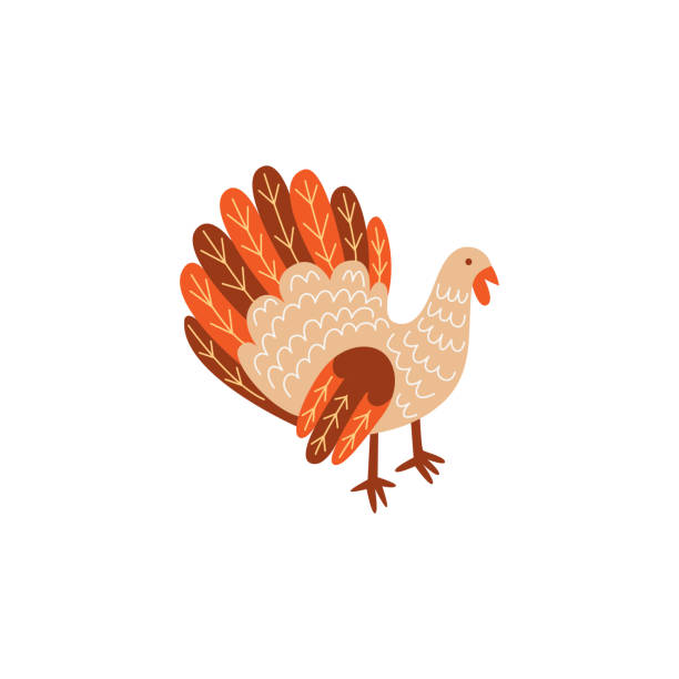 vector turkey bird flat illustration isolated - thanksgiving turkey stock illustrations