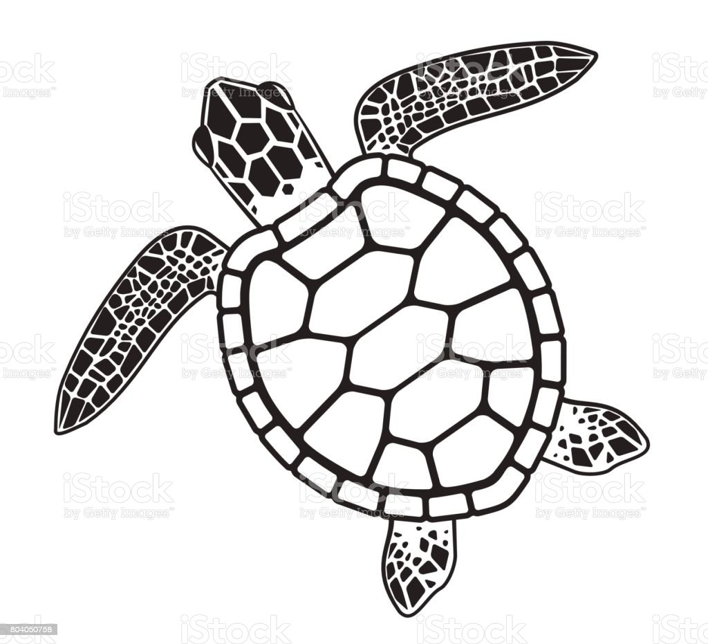 royalty free silhouette of turtle shell designs clip art vector rh istockphoto com Sea Turtle Organs Sea Turtle Skeletal System