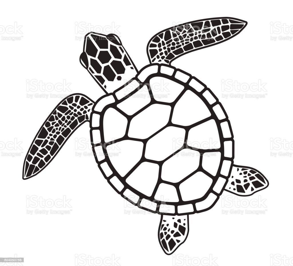 Vector turtle vector art illustration