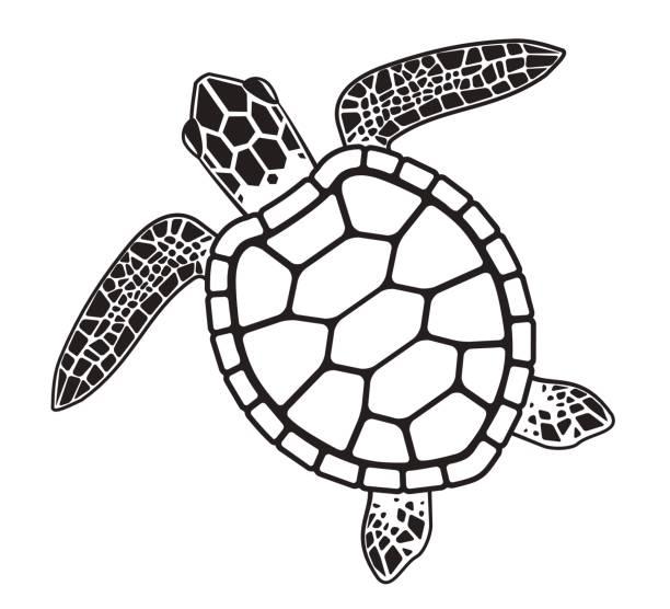 vector turtle - animal shell stock illustrations, clip art, cartoons, & icons