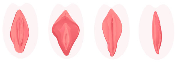 236 Vulva Illustrations & Clip Art - iStock