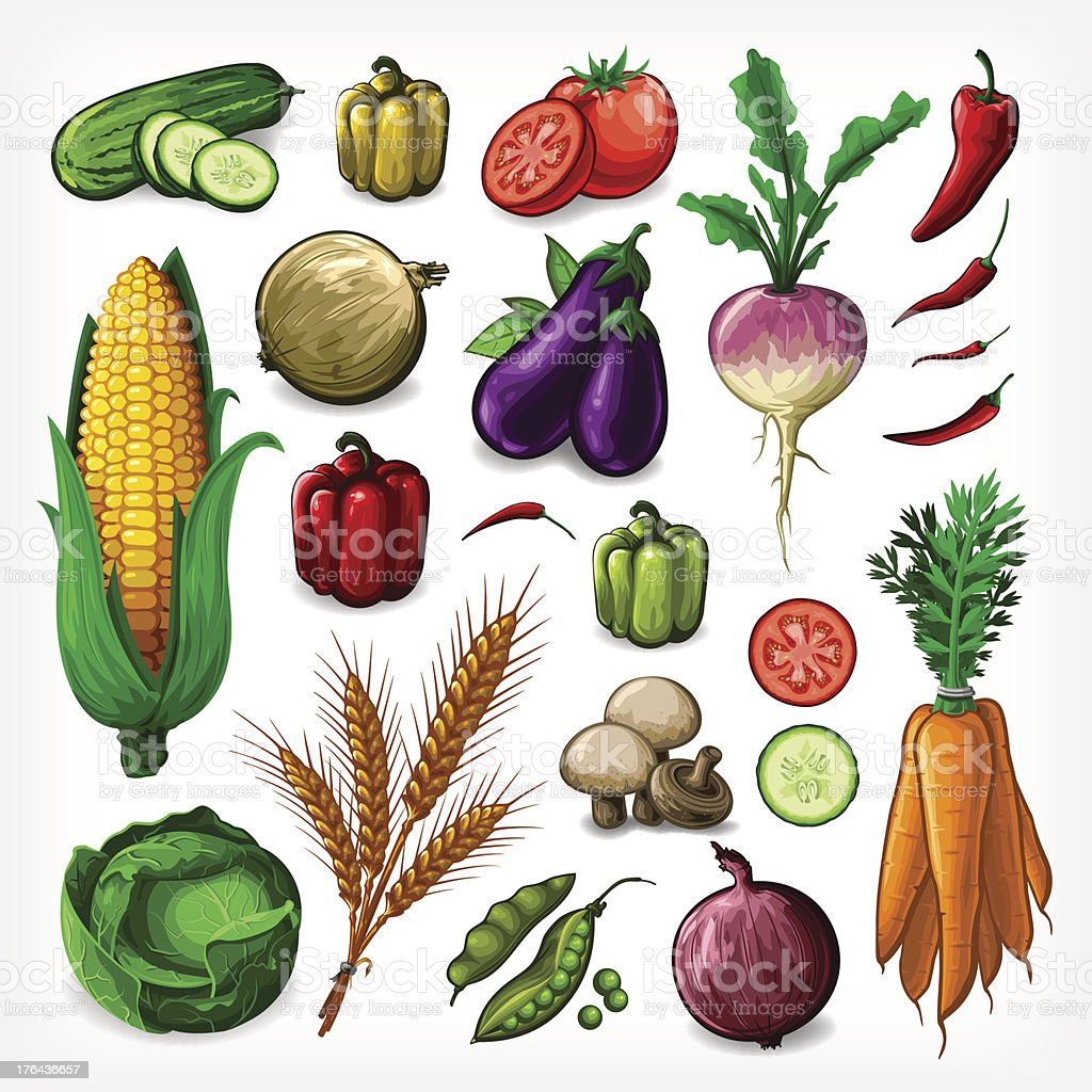 Vector Vegetables Set - Complete vector art illustration