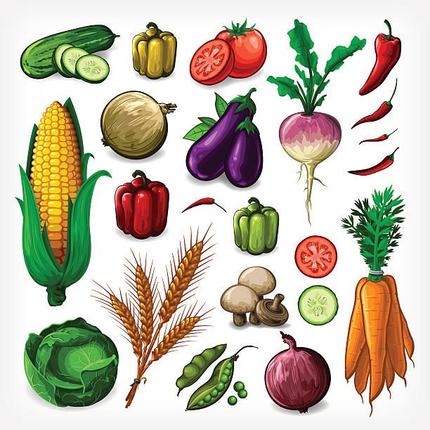 illustrazioni stock, clip art, cartoni animati e icone di tendenza di vector set di verdure-completa - melanzane