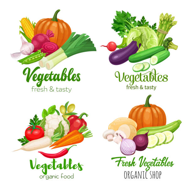 vector vegetables Healthy food banners with vector vegetables. Cabbage, pepper, beets, or carrots. Onion, zucchini, eggplant and asparagus. Corn, celery and mushrooms. squash vegetable stock illustrations