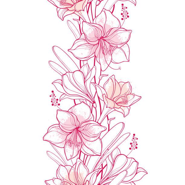 bildbanksillustrationer, clip art samt tecknat material och ikoner med vektor vertikal sömlösa mönster med kontur amaryllis eller belladonna lilja blomma och löv i pastell rosa på den vita bakgrunden. - amaryllis