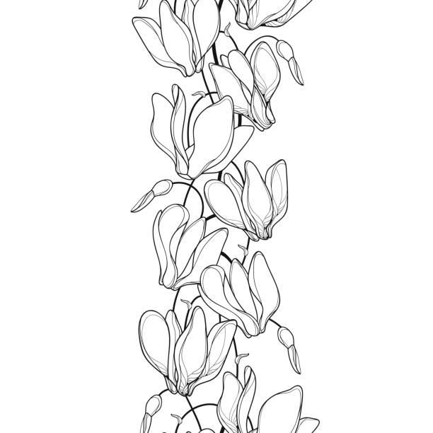 vektor senkrecht musterdesign mit gliederung alpenveilchen oder alpine violett haufen in schwarz auf weißem hintergrund. - alpenveilchen stock-grafiken, -clipart, -cartoons und -symbole
