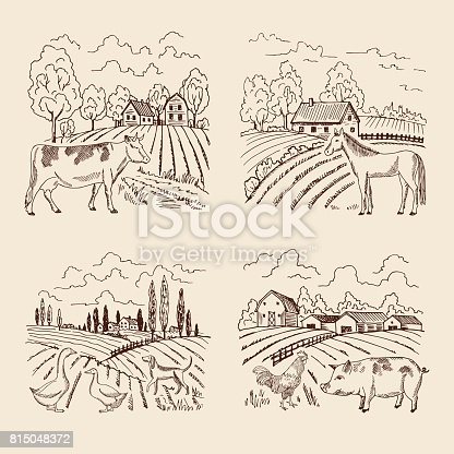 Vector village and big field. Landscape with farming and animals. Set of for illustrations in retro style. Village landscape with farm animals