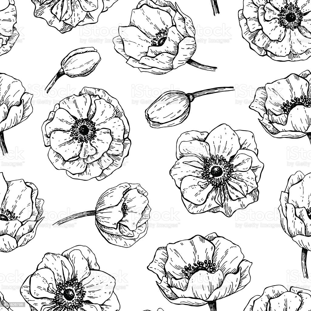 Anemone Flower Line Drawing : Vector vintage anemone seamless pattern hand drawn