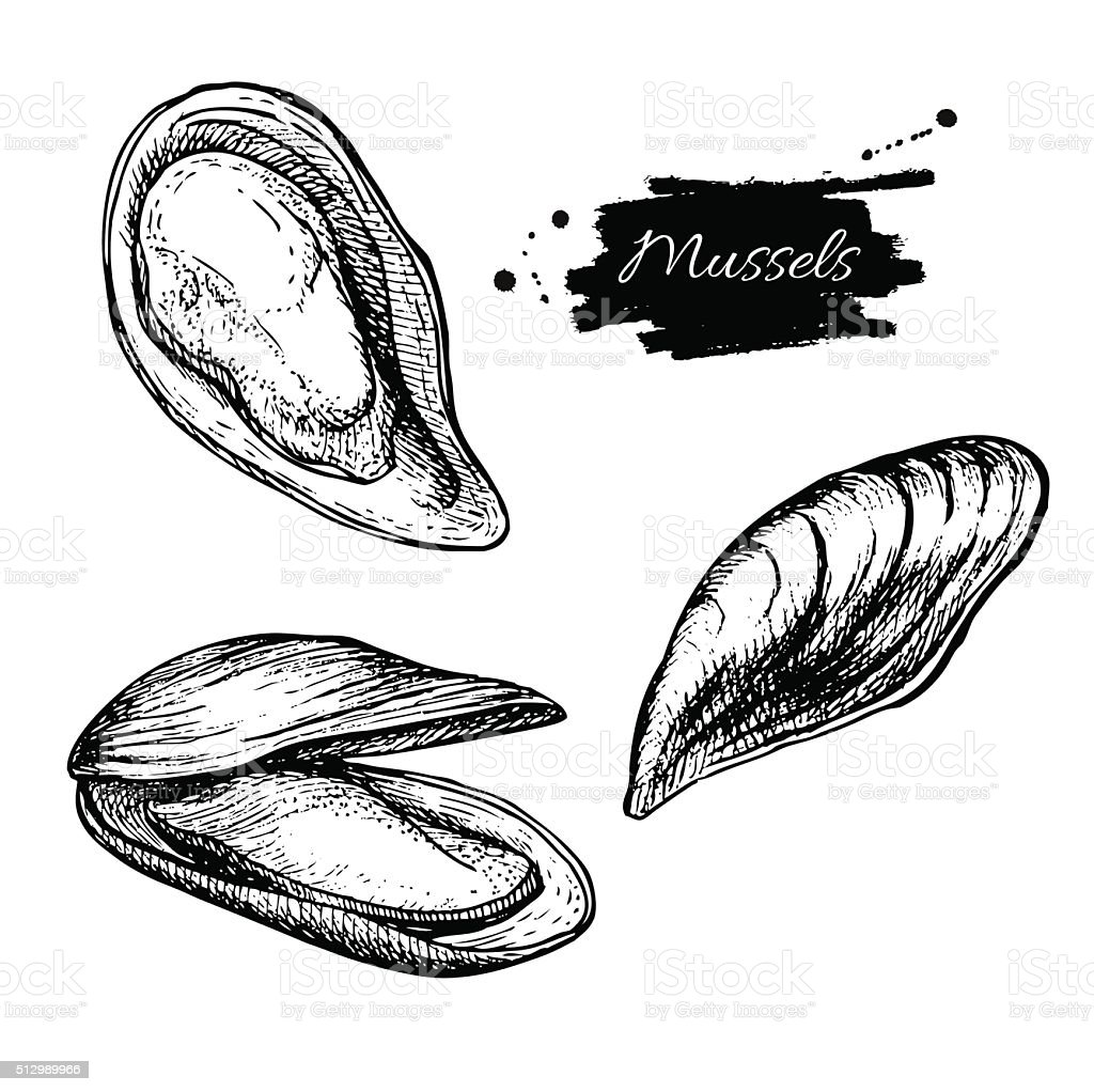 Vector vintage mussel set drawing. Hand drawn monochrome seafood vector art illustration