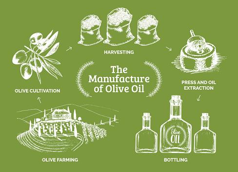 Vector vintage olive oil bottle illustration. Hand sketched rural farm production sign, label etc.